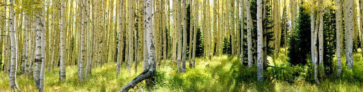 MOVO TREE FOUNDATION